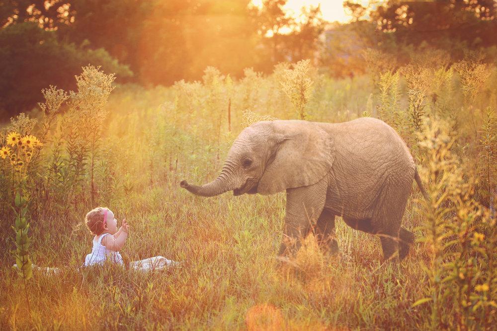 IMG_7143 edit elephant.jpg
