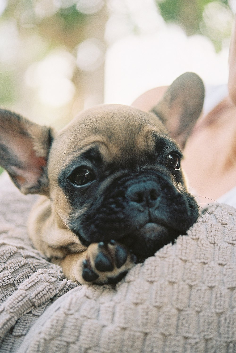 French Bull Dog Love_0001.jpg