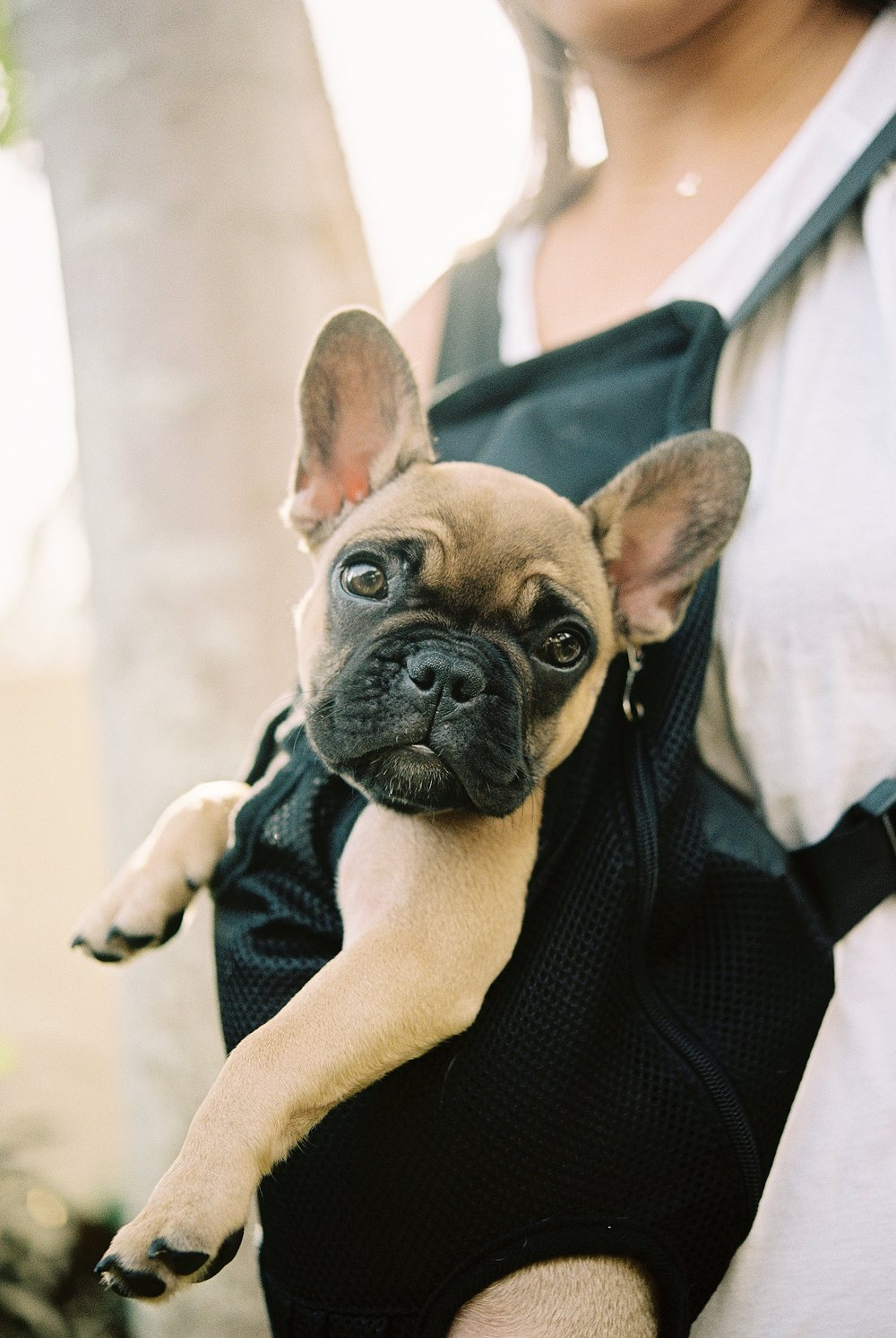 French Bull Dog Love_0005.jpg