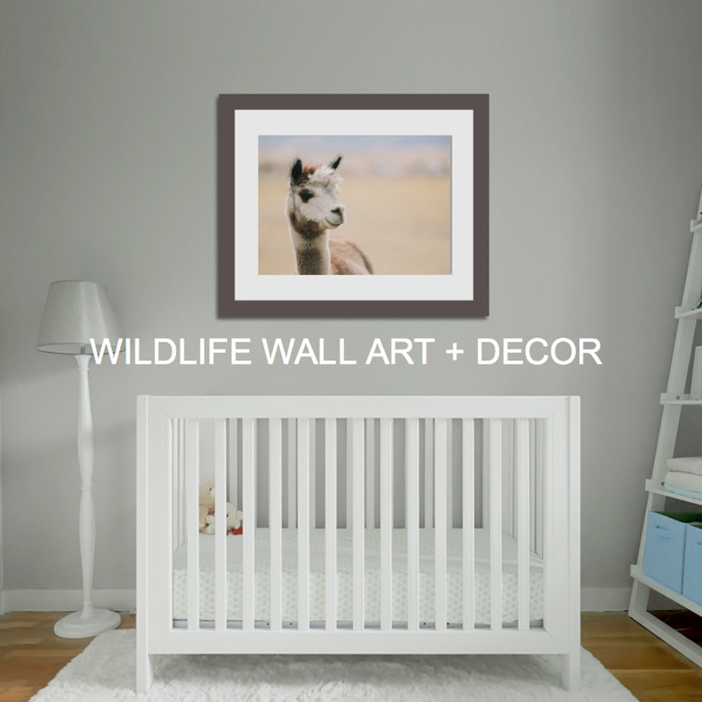 WILDLIFE-WALL-ART-AND-DECOR.jpg