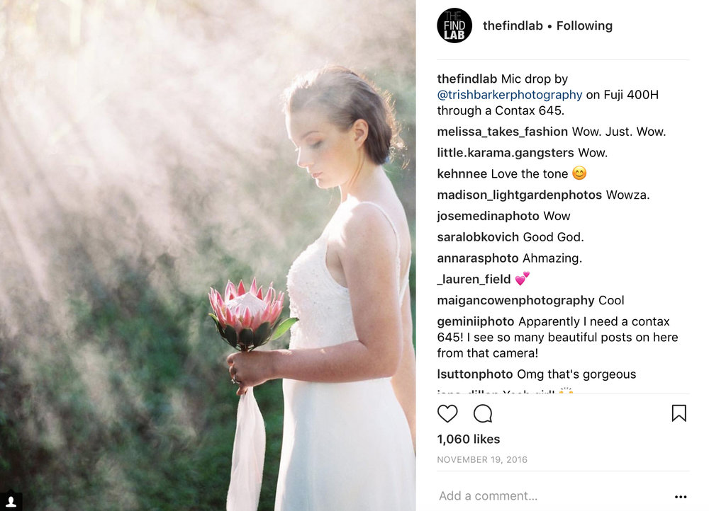 find-lab-share-instagram-bride-holding-protea-sunbeams.jpg