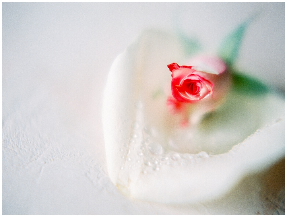 Maui-Branding-Photographer-Rosewater-Studio006.jpg