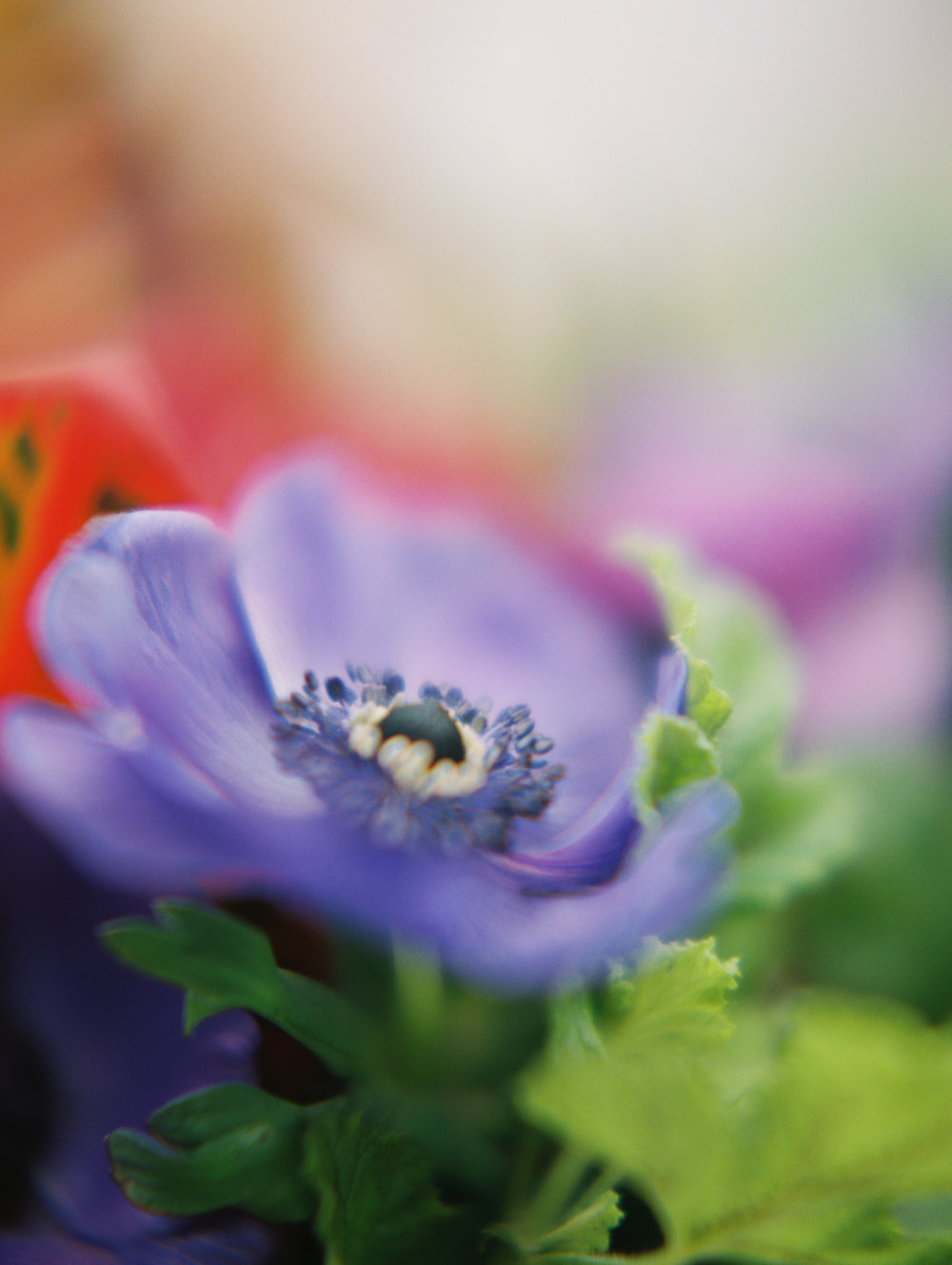 Flora-Bouquets040.jpg