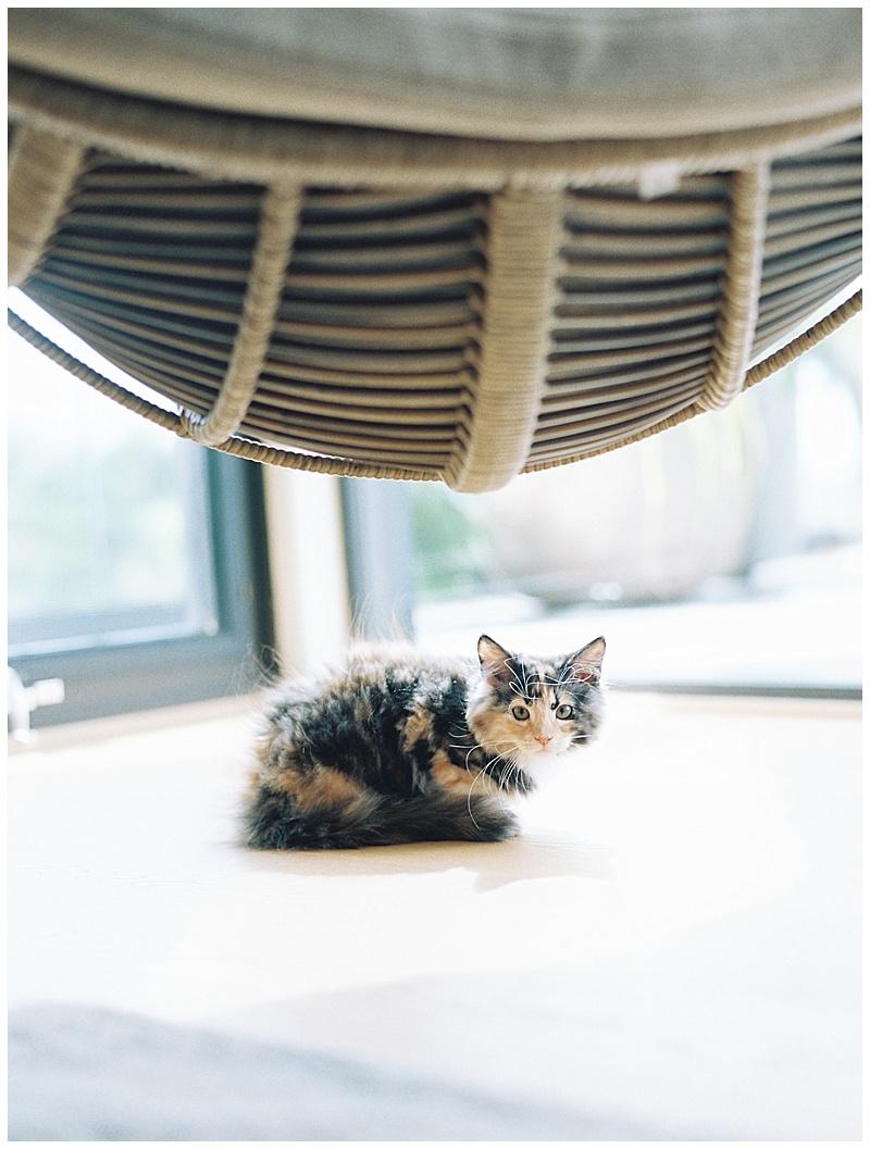 maui-family-photographer-magic-family-plus-kittens_0009.jpg