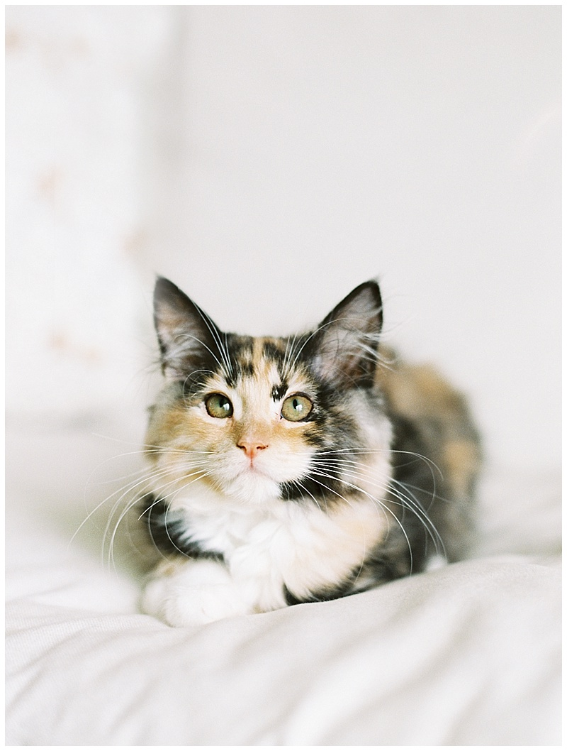 maui-family-photographer-magic-family-plus-kittens_0028.jpg