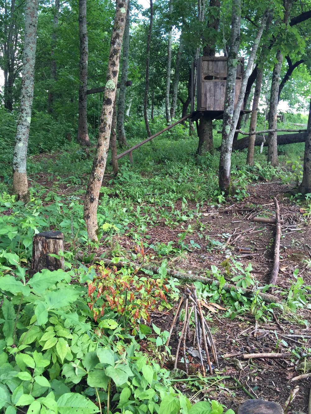 Jonah's fairy house (in the foreground) and swings and fort in the woods beside his family's house. He spends a lot of time in this place.