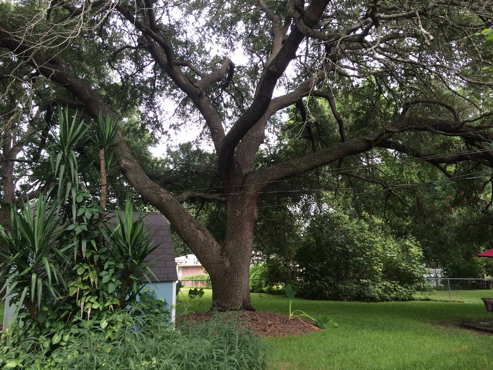 """I bought it for the great tree,"" says Karen of her new home in a historic area of Sugar land, Texas."