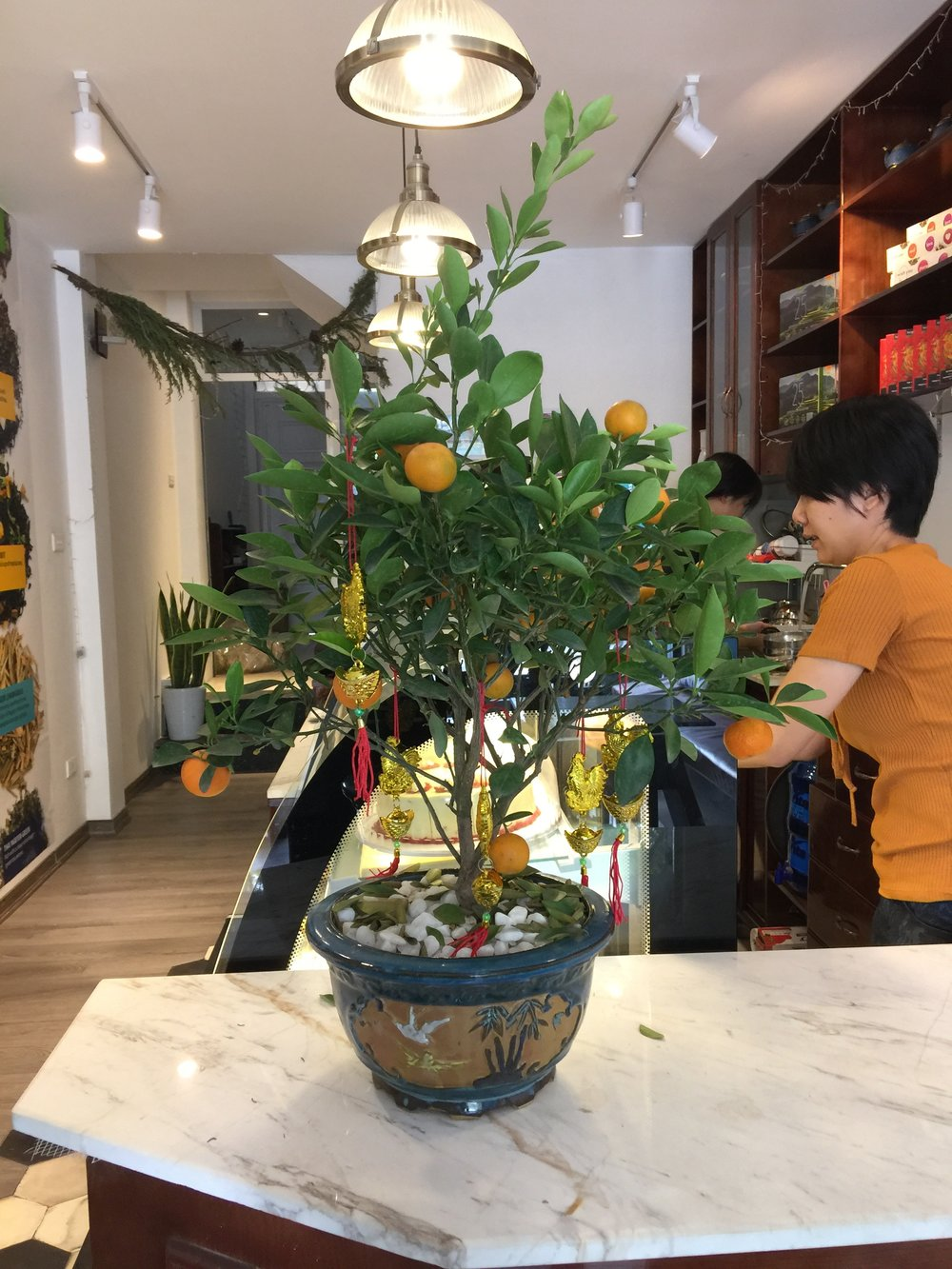 A small kumquat tree laden with fruit in a cafe in Hanoi, Vietnam.