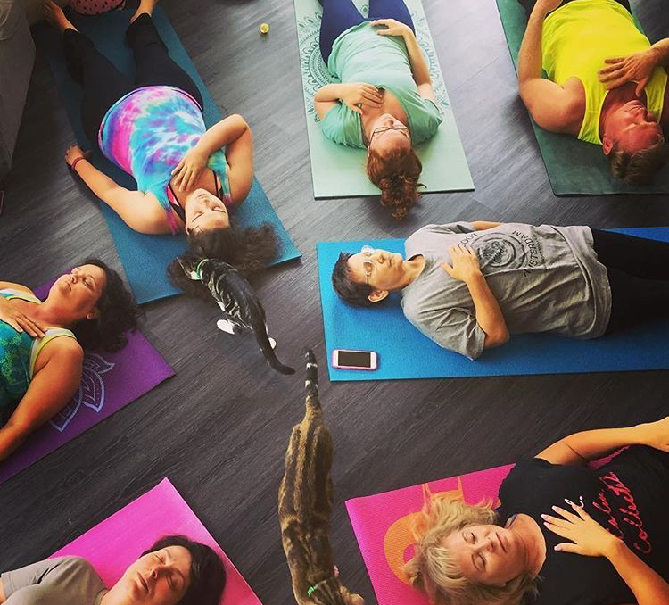 $25 - 1 Hour Yoga + 30 minute cat time! Please bring your own yoga mat.