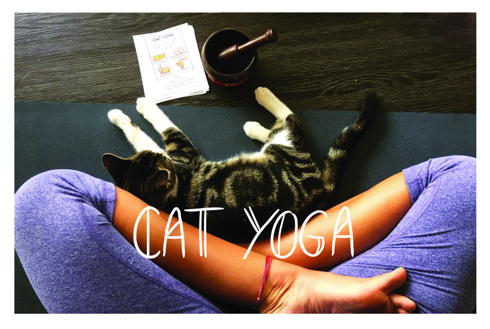 Get your zen on. - Cat Yoga is the purrfect relaxation practice that is both peaceful and fun!