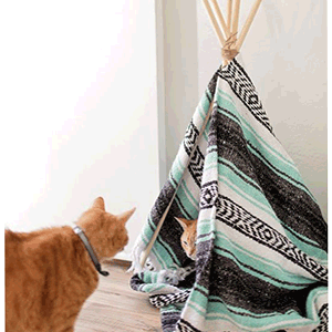 Cat TIPI DIY - 11am-1pm$45Does your cat need a new chill place? Come create and paint on this adorable tipi sleeping zone~All supplies included and CATS!