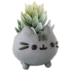Clay Cat Planters - 11am-2pm$25Need a new plant friend in your life! Join us for our cat planter class, we will provide the clay, plants, and cats!