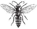 Native Bee.png