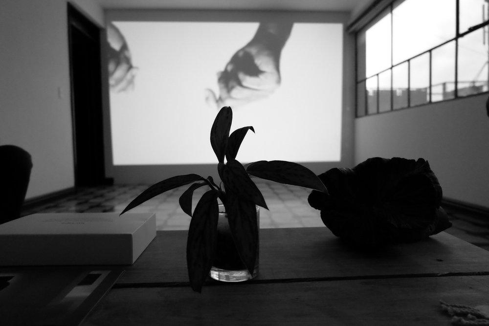 Tropo 2 (N), video instalación por Gustavo Artigas, en Espacio Yvonne (2016).