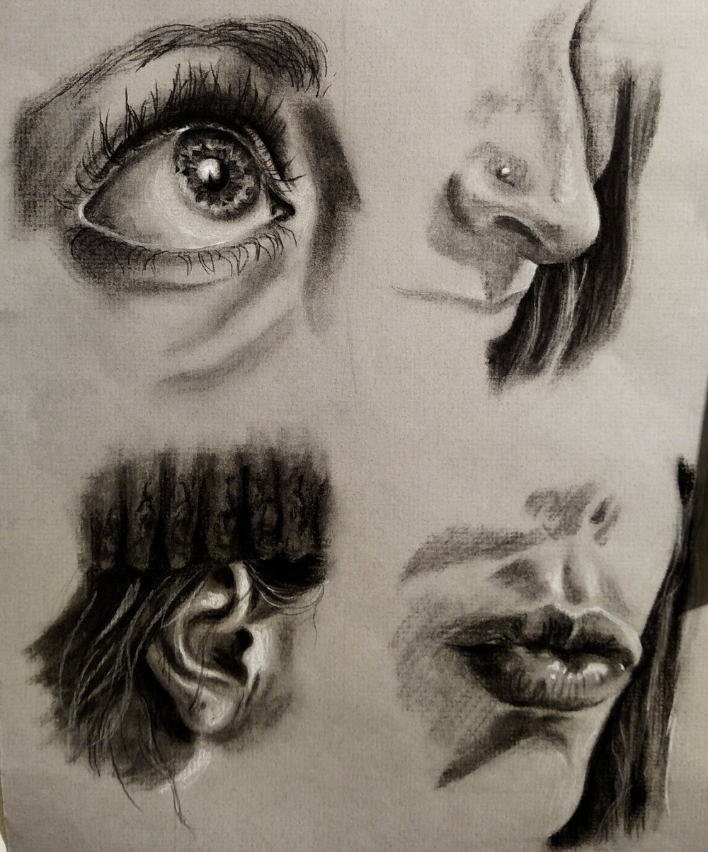 Eyes, Nose, Ear, and Mouth Studies  Toned Paper 2016