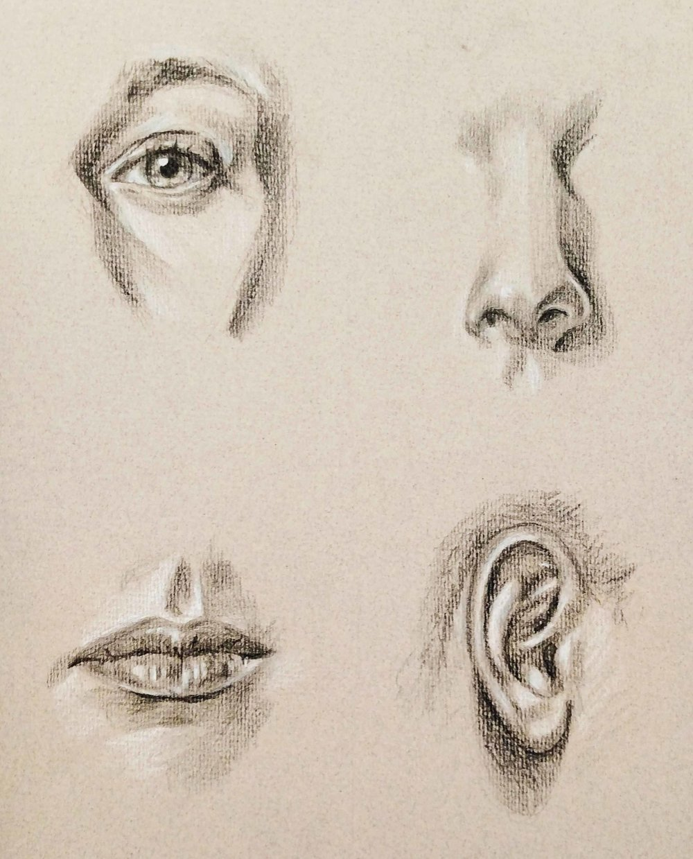 Life Drawing  Eyes, Nose, Ears and Mouth Studies  Direct Observational 2017  Charcoal on Toned Paper