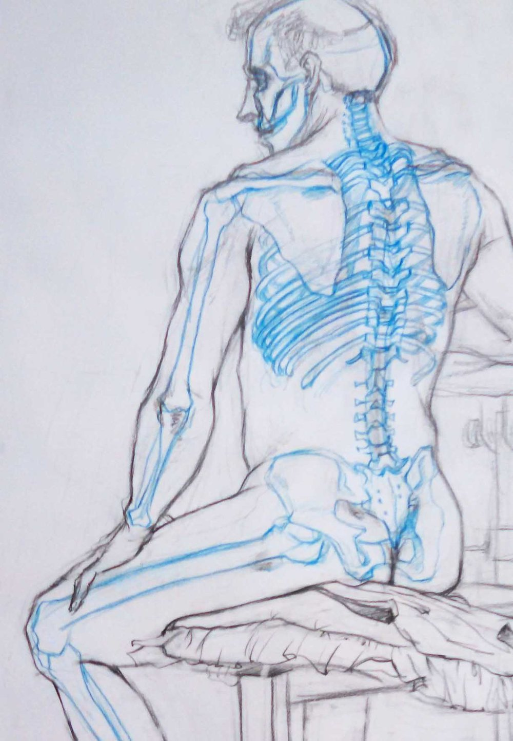 Life Drawing  Direct observational drawing   Graphite and Blue Drafting Pencil  2016