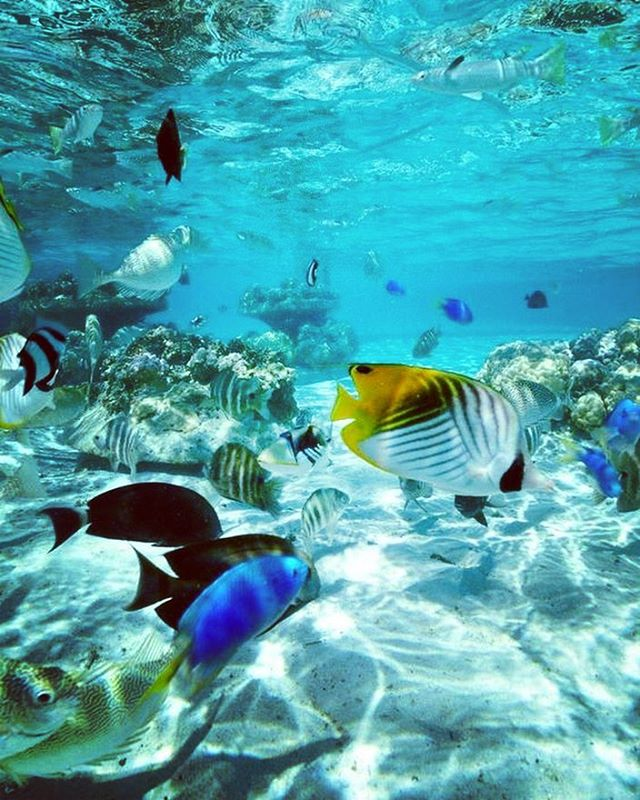 Simple. Beautiful. Pure. Let's keep the oceans clean for these creatures that are so important to our own well being.