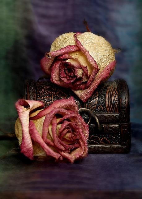 rose-3142036_640.jpg