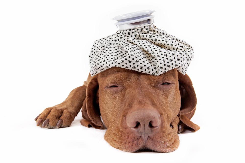 sickk dog.jpg