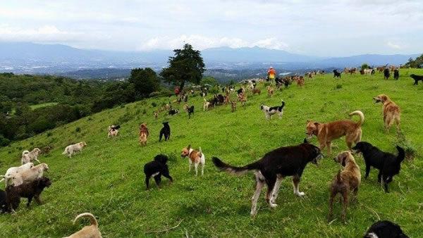 territorio-zaguates-dog-hike-600x338.jpg