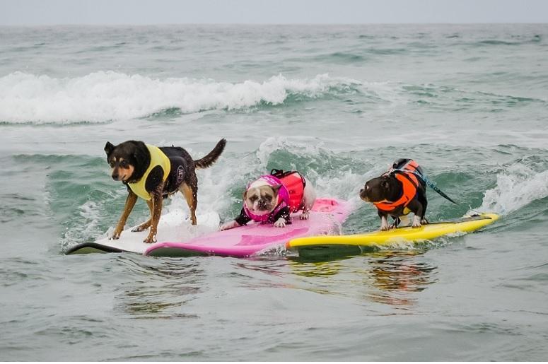 surf dog surfathon cover.jpg