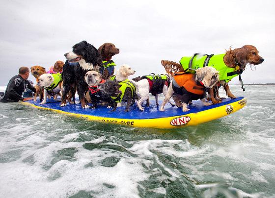 sandiegosurfdogs.jpg