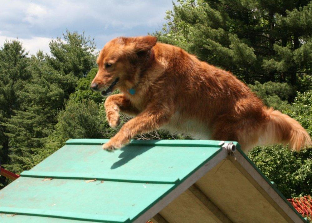 CanineCampGetaway-1024x730.jpg