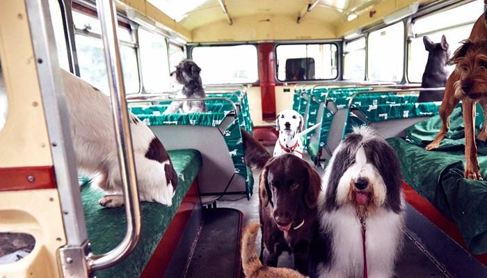 dogs-on-a-bus-1600x900-img_0336.jpg