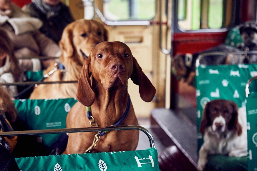 dog-tour-bus.jpg