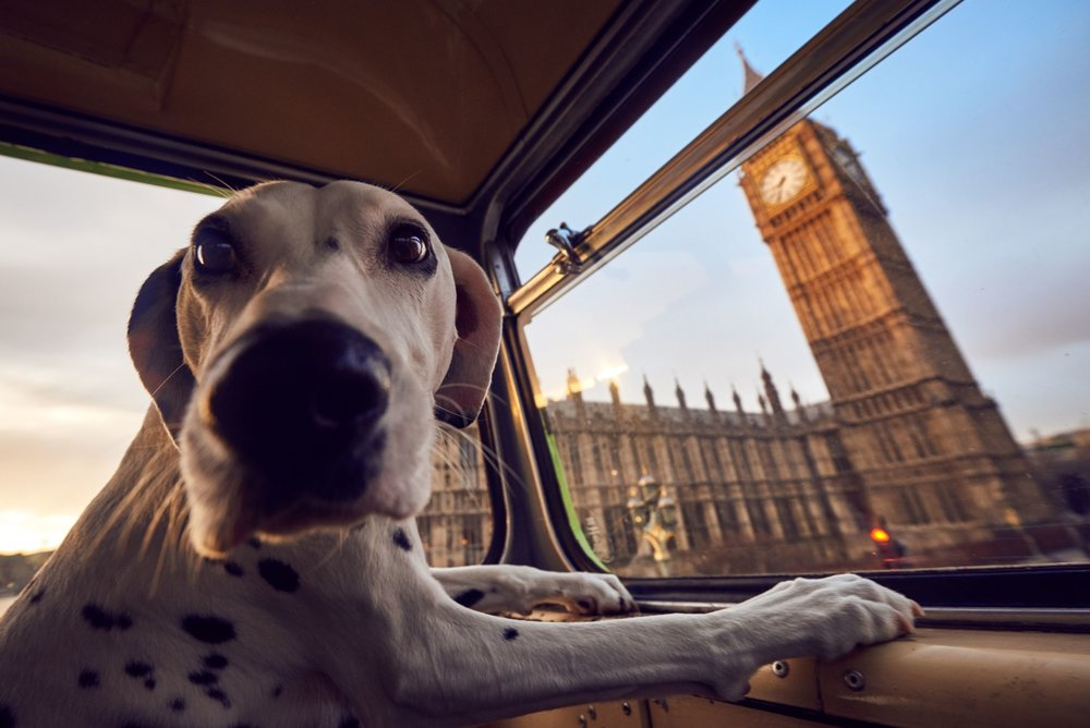 more-than-dog-tour-bus.jpg