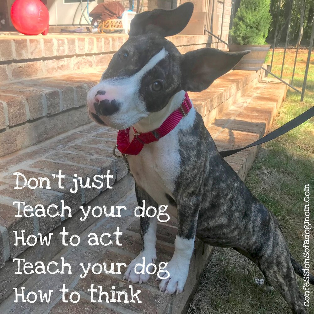 """Don't just teach your dog how to act, teach your dog how to think."""
