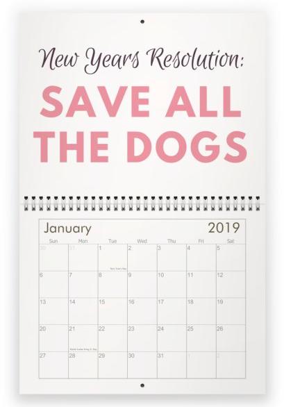 dog mom 2019 calendar