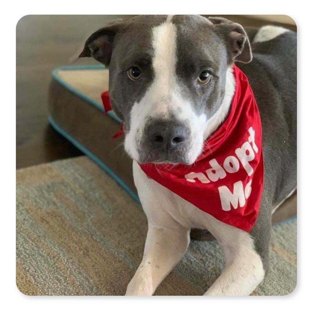 adoptabledogs-galsbestfriend