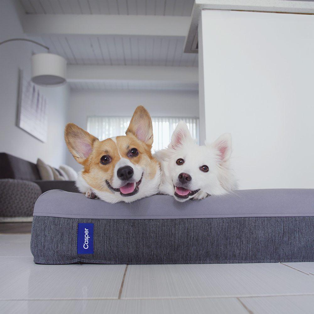 gals best friend casper bed