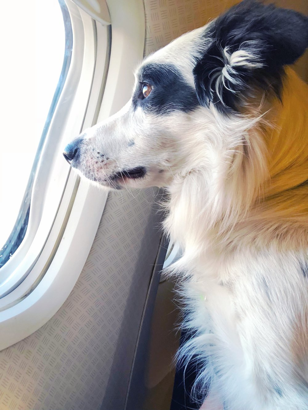 Fly With Dog. Gal's Best Friend