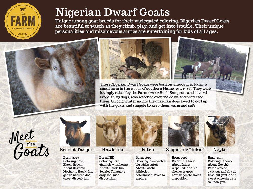 goats_farm.jpg