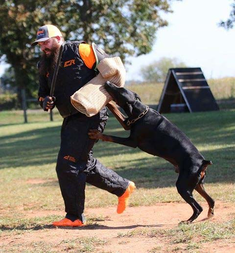doberman escape.jpg