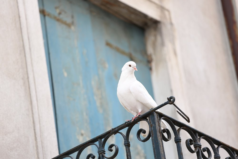 holy-spirit-waiting.jpg