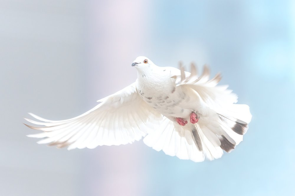 Holy Spirit symbolized as Dove
