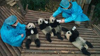 EventPost -Pandas