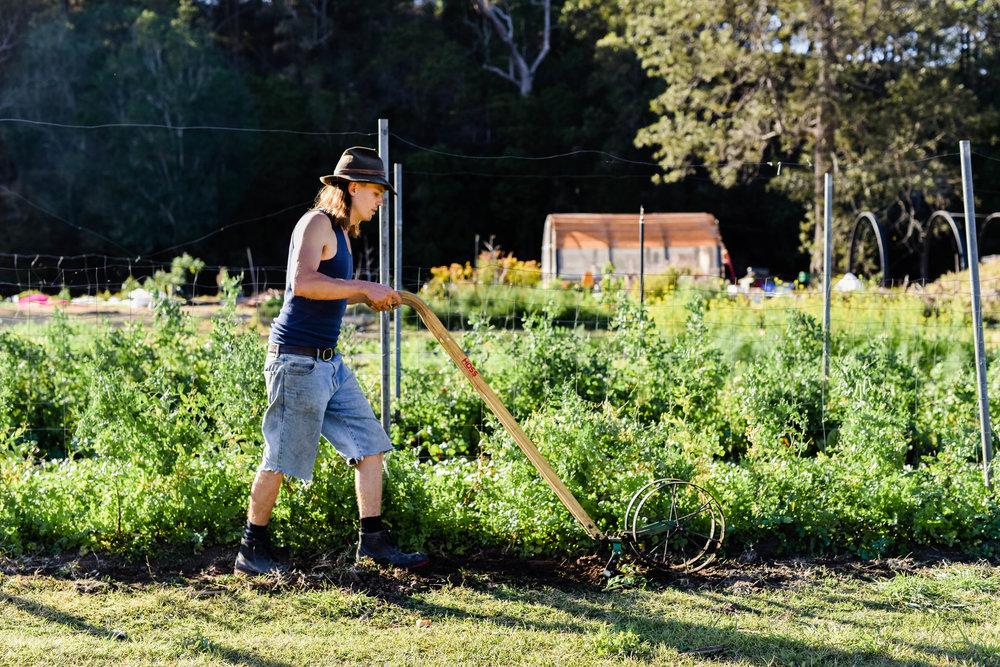 WWFF-Loop Growers-hannah puechmarin-8319.jpg