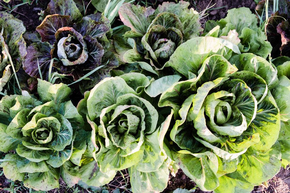 WWFF-Loop Growers-hannah puechmarin-8009.jpg