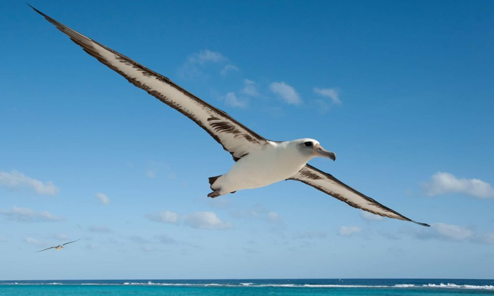 Albatross ... 'They are loving, sensitive and graceful,' says Jordan. Photograph: Chris Jordan