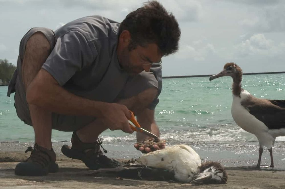 Jordan inspects the plastic ingested by a chick in Albatross. Photograph: Chris Jordan