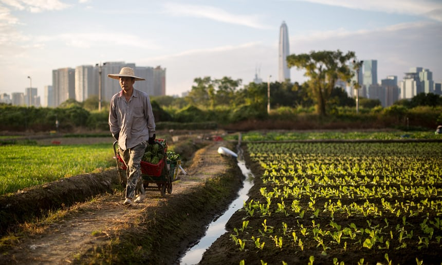 A farmer at work near the village of Lok Ma Chau, outside Shenzhen, Hong Kong. Photograph: Jerome Favre/EPA