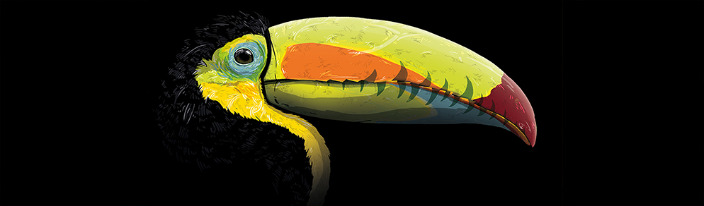 Slideshow_Toucan.jpg
