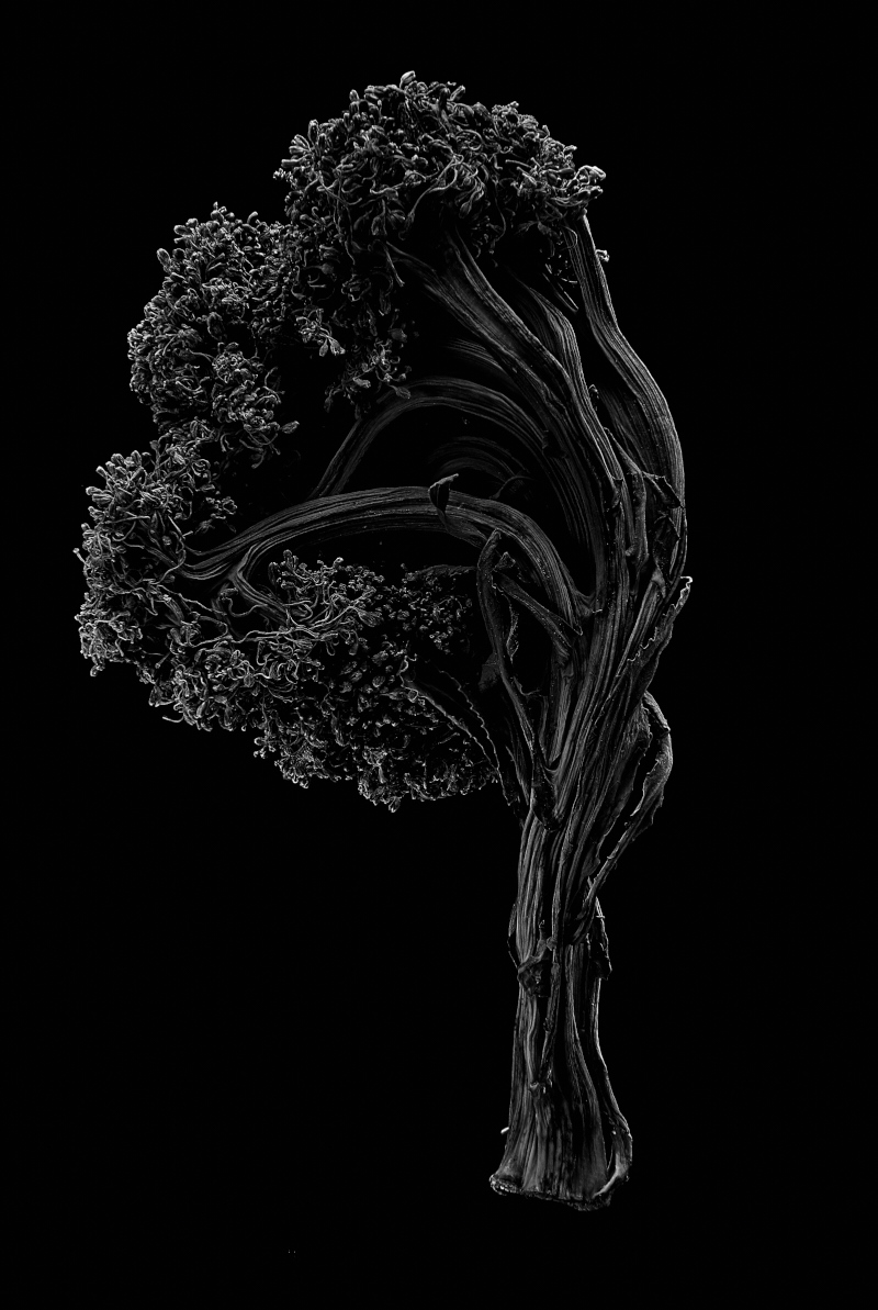 Broccoli_06.jpg