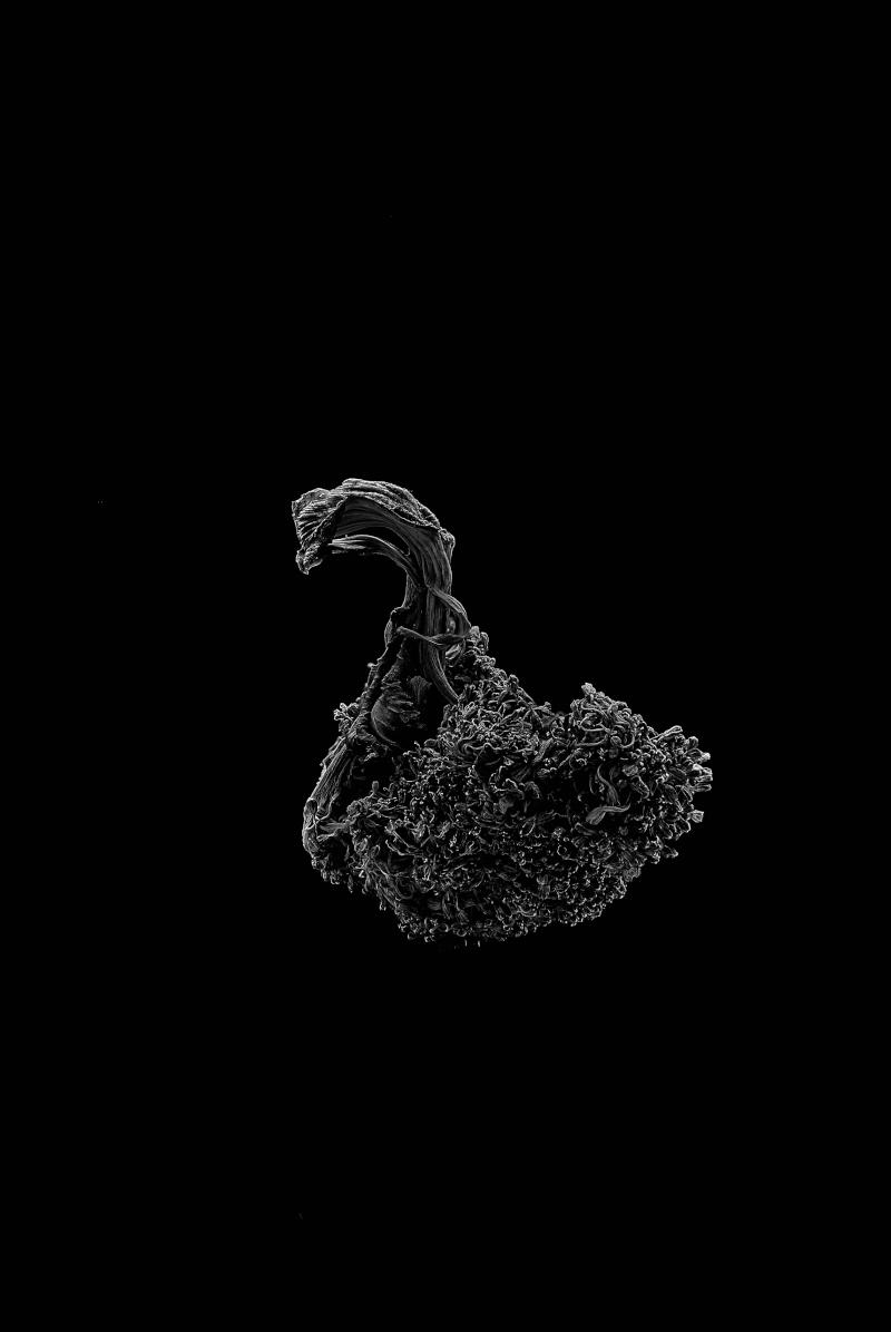 Broccoli_07.jpg