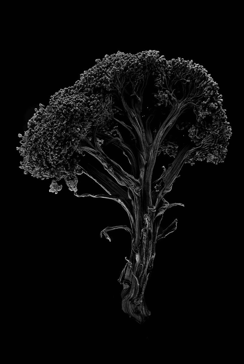 Broccoli_19.jpg